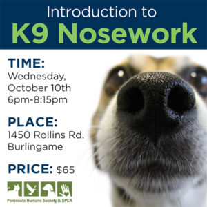 Introduction to K9 Nosework @ Peninsula Humane Society & SPCA