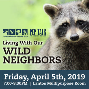 PEP Talk: Living With Our Wild Neighbors @ Peninsula Humane Society & SPCA