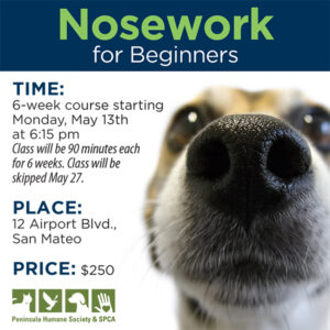 Nosework for Beginners @ Peninsula Humane Society & SPCA